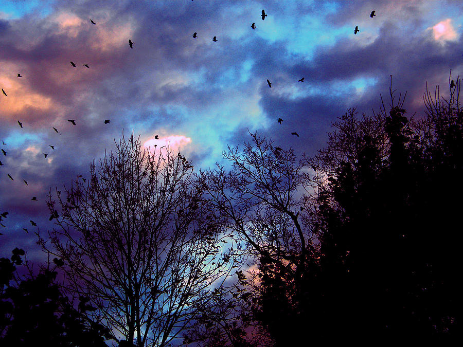 Crows Photograph - Return Of The Crows by Martin Morehead