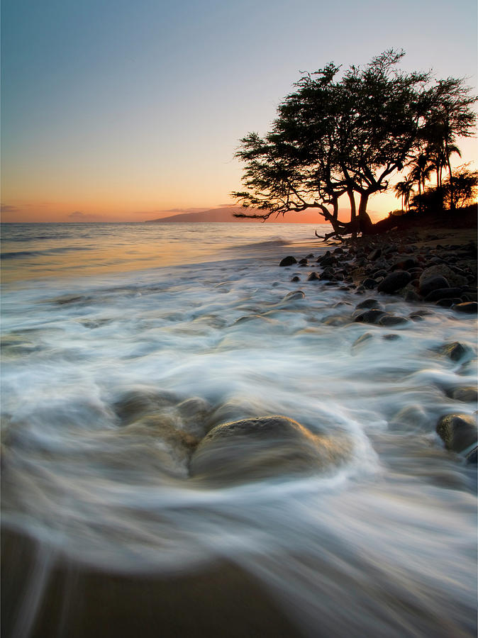 Tree Photograph - Return To The Sea by Mike  Dawson