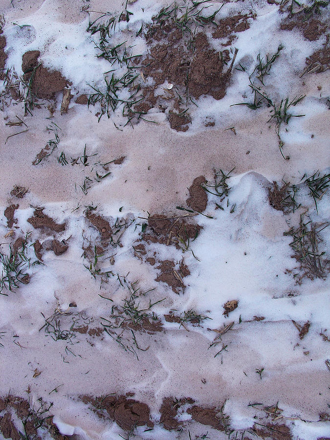 Nature Photograph - Reversing The Roles - Soil Dusting A Crispy Snow by Terrance DePietro