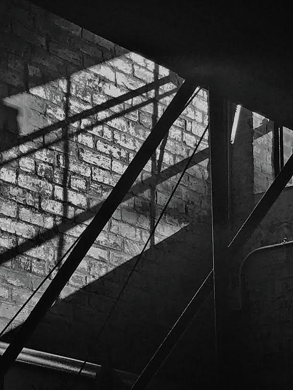Bnw Photograph - Revitalized by Tara Miller