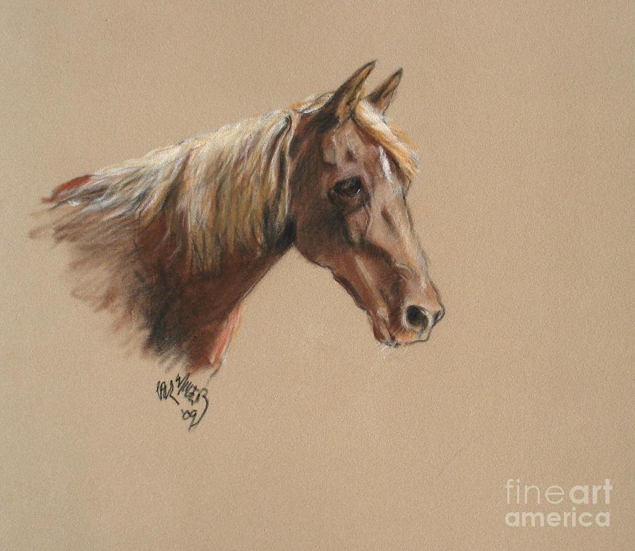 Morgan Horse Painting - Reyena At The Morgan Horse Ranch Prns by Paul Miller