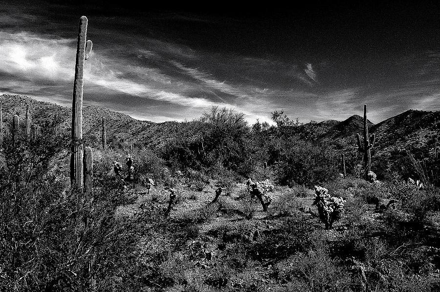 Arizona Desert Photograph - Reymert Rolls by John Gee