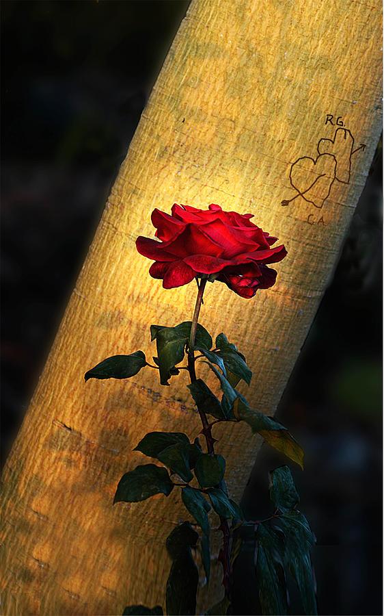 Love Photograph - RG Loves CA by Richard Gordon