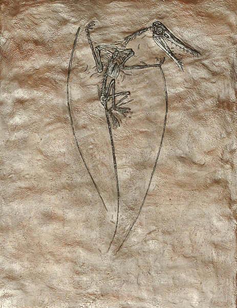 Fossil Sculpture - Rhamphorhynchus Plaque by Alex Nelson