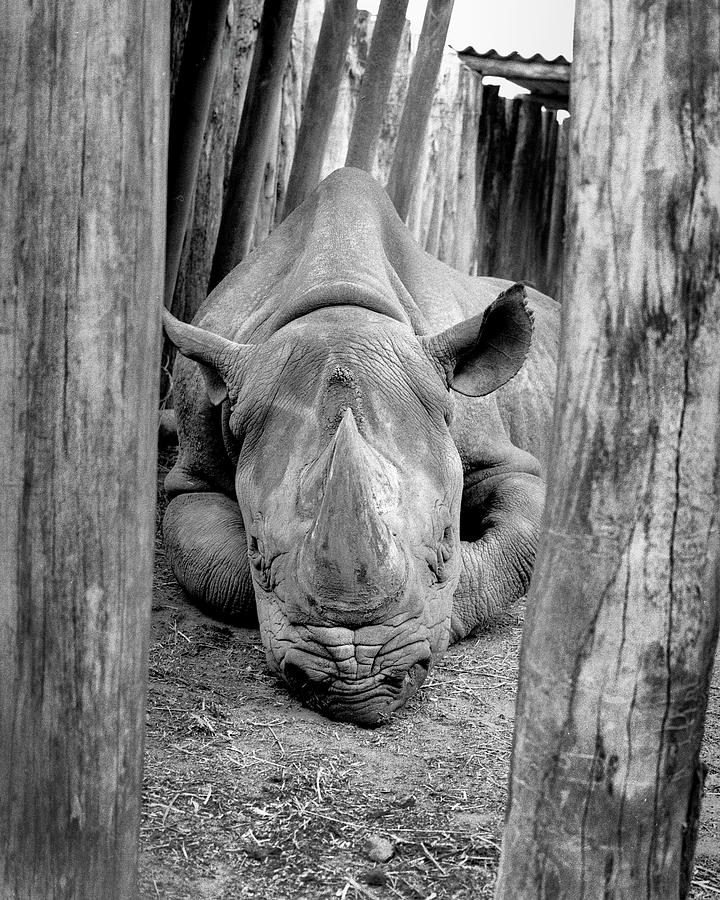 Photograph Photograph - Rhino by Bruce Cowell