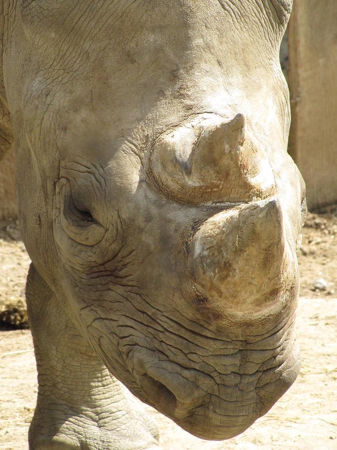 Rhino Photograph - Rhino Closeup by George Jones