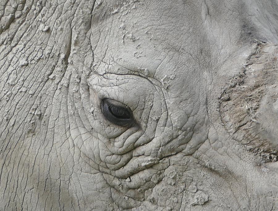 Hi-res Photograph - Rhino Eye by Ivana Westin