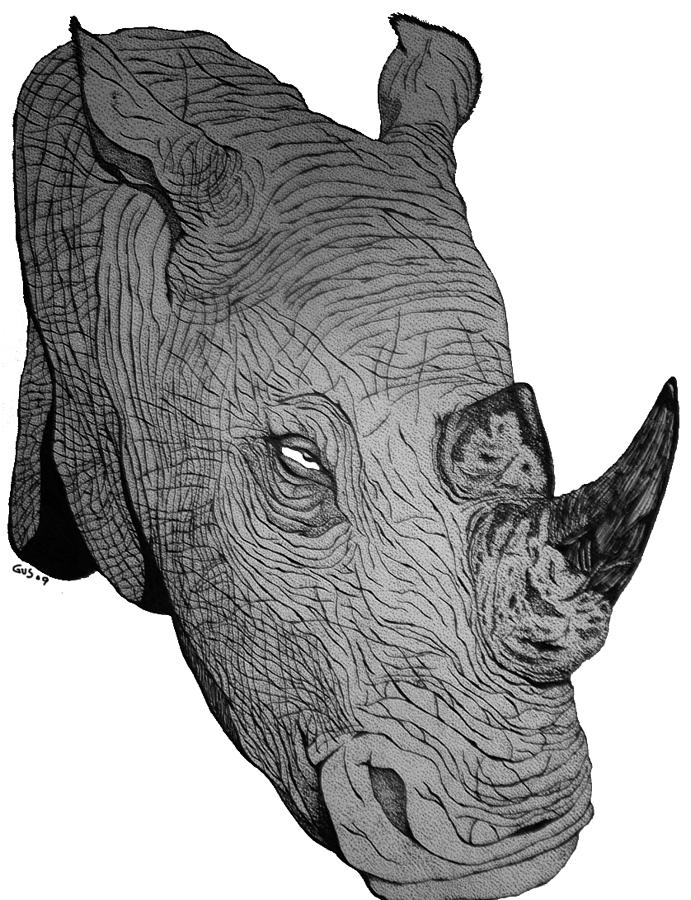 Rhino Drawing by Nick Gustafson