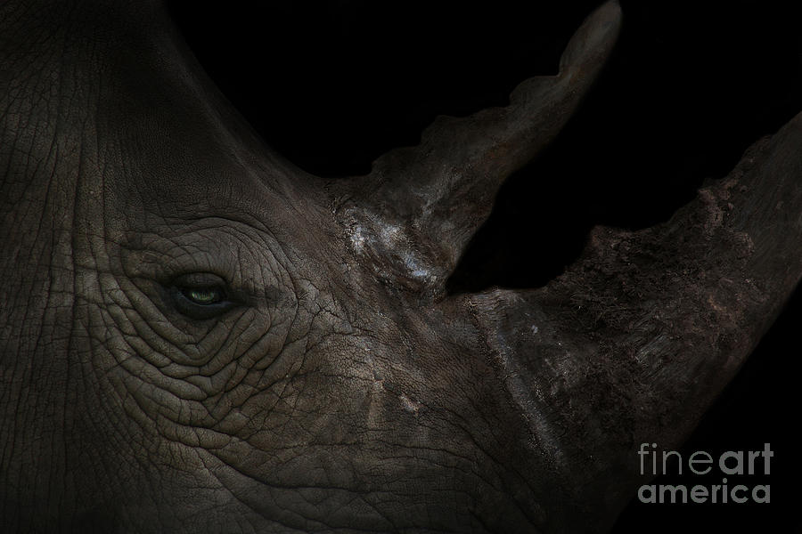 Rhinoceros Photograph - Rhinoceros by Lynn Jackson