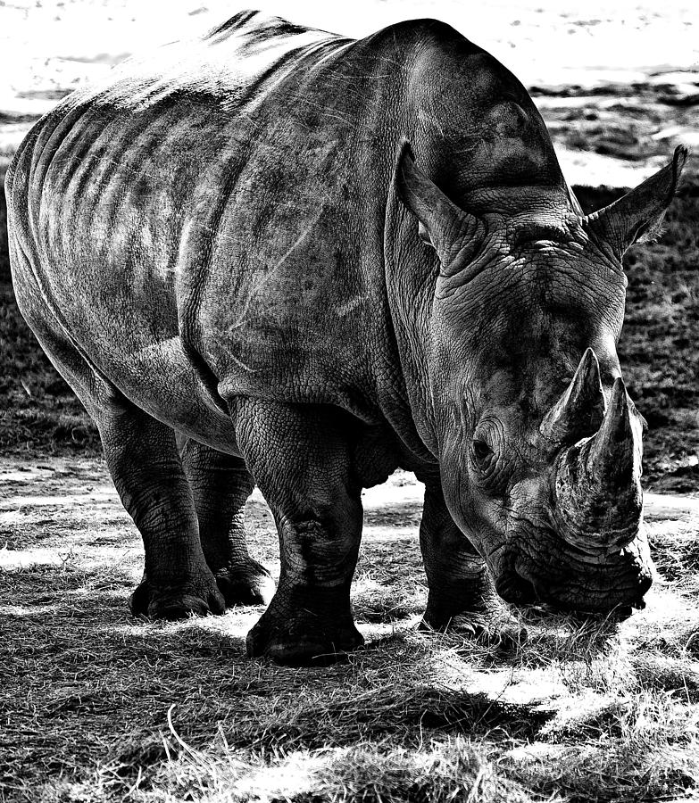 Rhino Photograph - Rhinoplasty by Sarita Rampersad