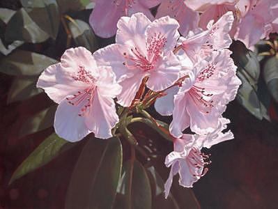 Floral Painting - Rhododendron 01 by Edd Cox