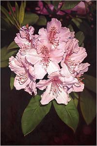 Floral Painting - Rhododendron 02 by Edd Cox