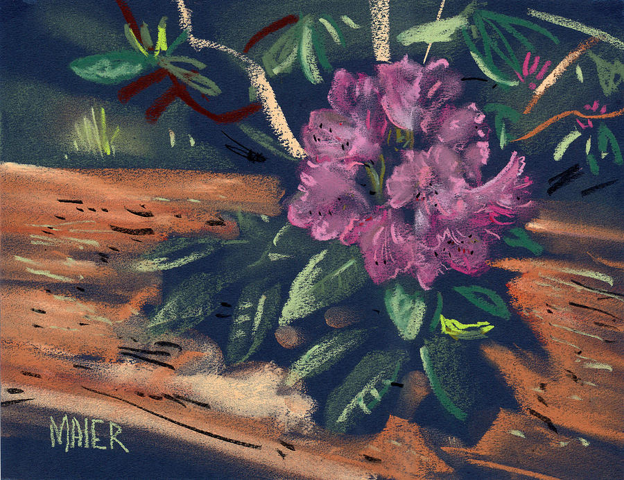 Rhododendron Drawing - Rhododendron by Donald Maier