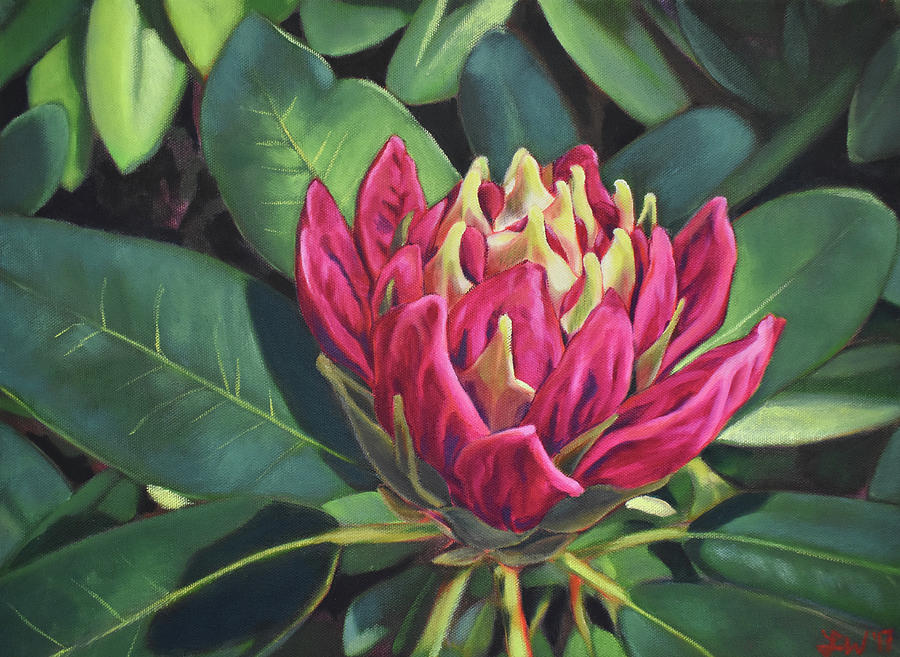 Rhododendron Painting - Rhododendron Opening by Lauren Waterworth