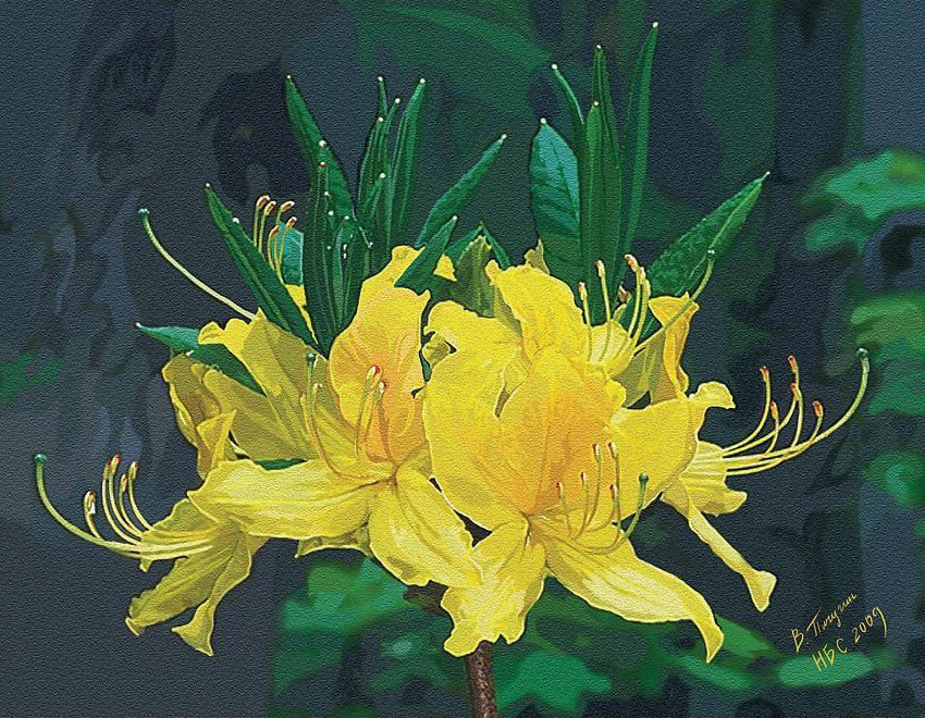 Botanical Painting - Rhododendron by Vladislav Pichugin