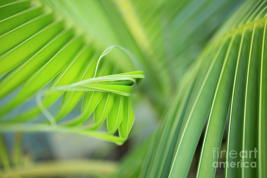 Rhythm of a Palm Frond by Charmian Vistaunet