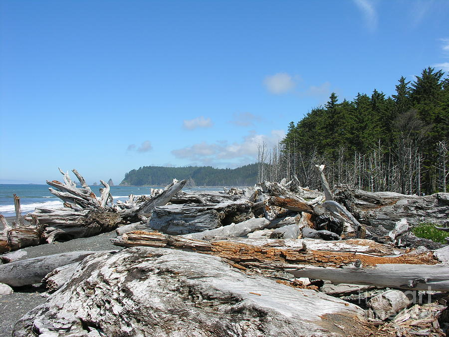 Tree Photograph - Rialto Beach Washington  by Diane Greco-Lesser