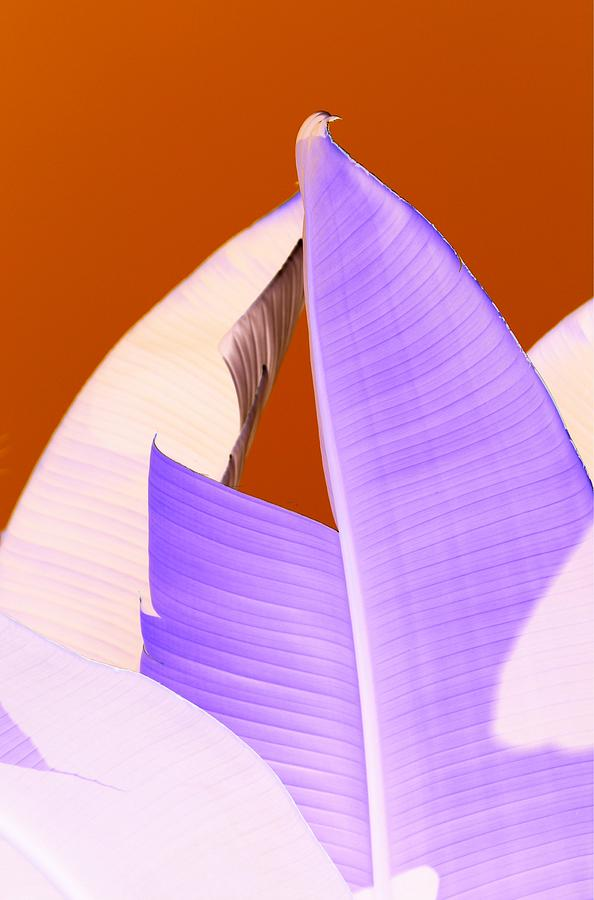 Abstract Photograph - Ribbed In Violet by Florene Welebny