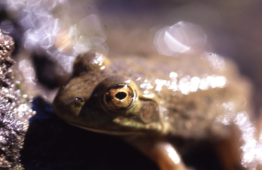 Ribbit Photograph by Curtis J Neeley Jr