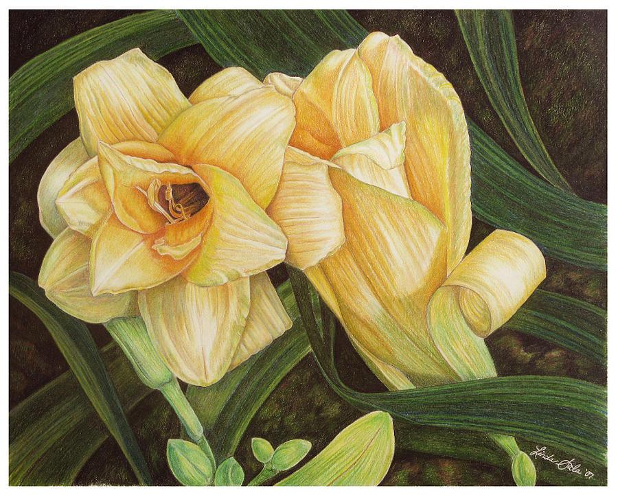 Floral Drawing - Ribbons And Bows by Linda Sala
