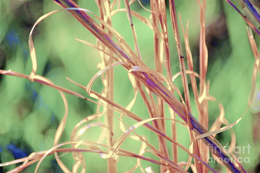 Ribbons Of Grass Photograph