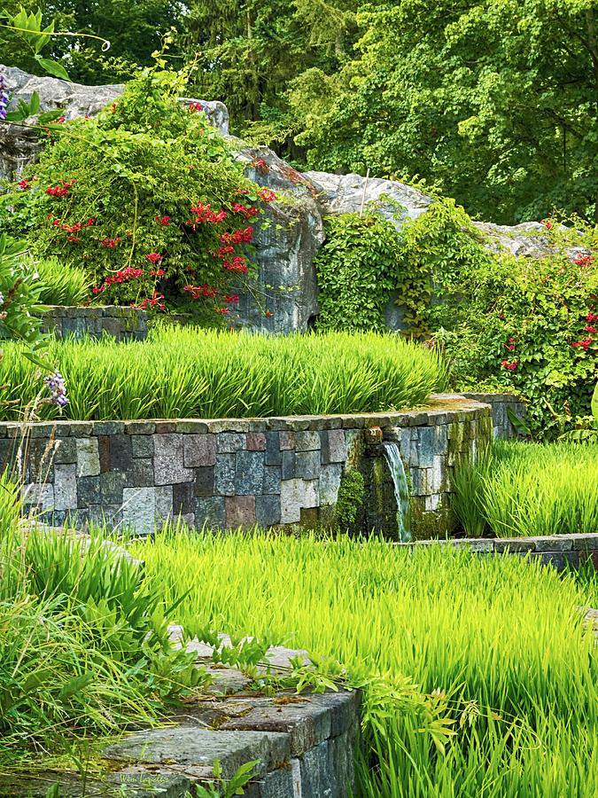 Rice Photograph - Rice Garden by Wim Lanclus