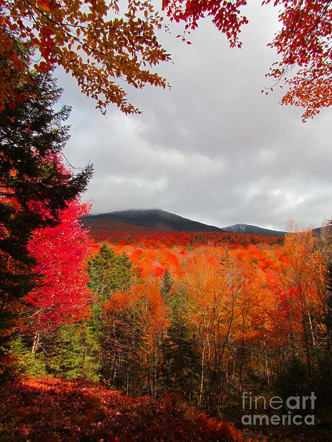 Autumn Photograph - Rich Fall New Hampshire Colors by Elizabeth Dow