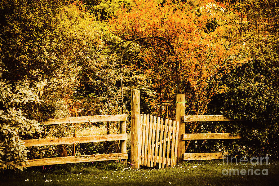 Country Photograph - Rickety Countryside by Jorgo Photography - Wall Art Gallery