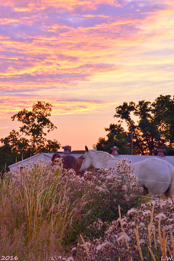 Ride Off Into The Sunset Photograph - Ride Off Into The Sunset by Lisa Wooten