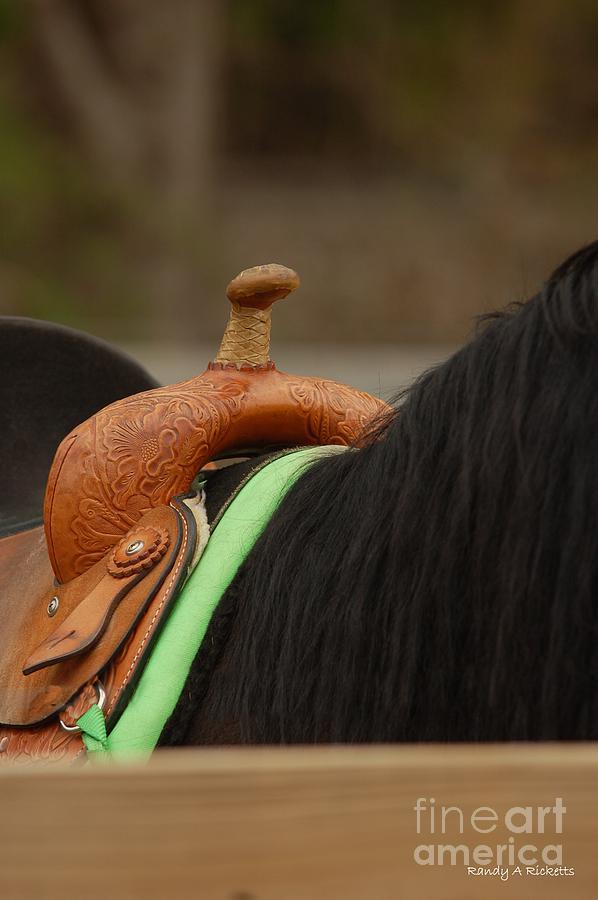 Horse Photograph - Rideem by Randy Ricketts