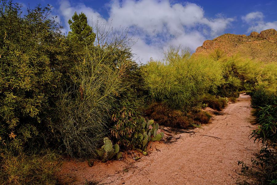 Ridge Trail No1 Photograph