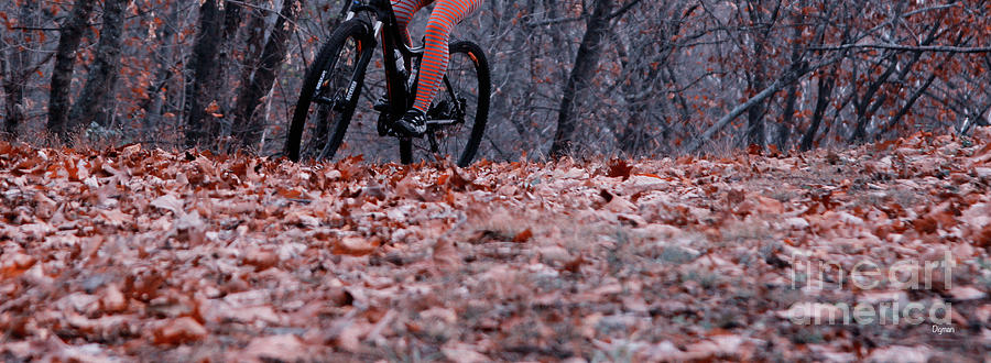 Bicycles Photograph - Riding Autumn  by Steven Digman