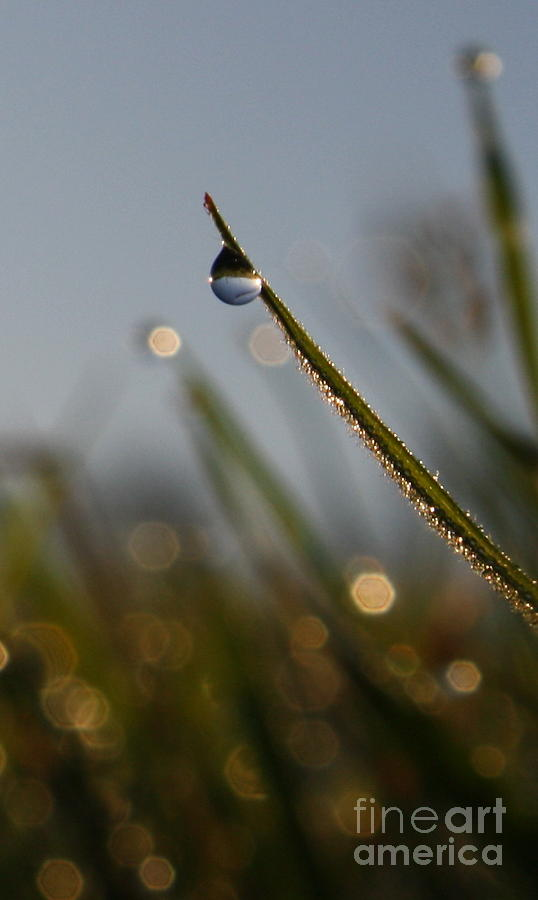 Grass Photograph - Right Side Down by Laura Horgan