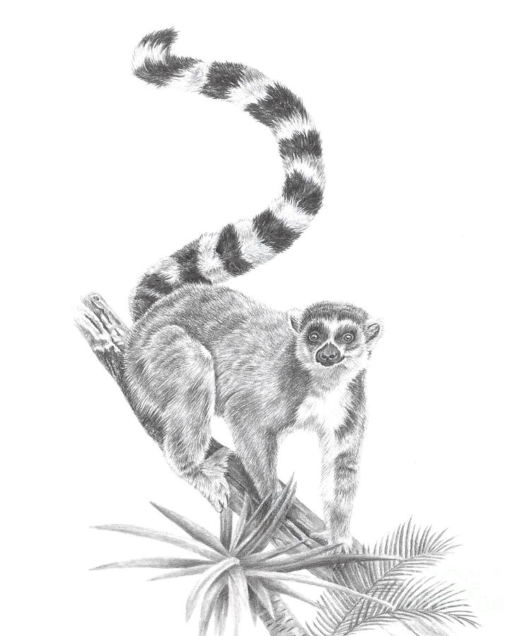 Ring-tailed Lemur by Pencil Paws