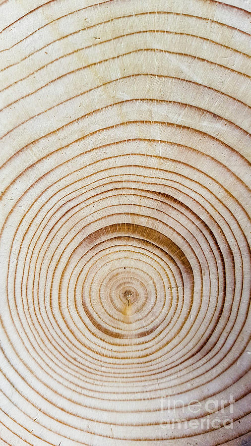 Tree Photograph - Rings Of A Tree by Cesar Padilla