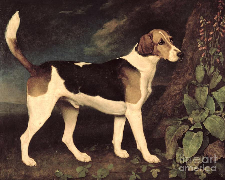 George Stubbs Painting - Ringwood by George Stubbs