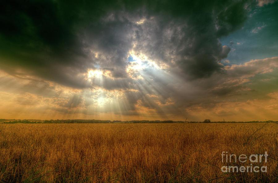 Wheat Digital Art - Ripening Wheat by Nigel Bangert