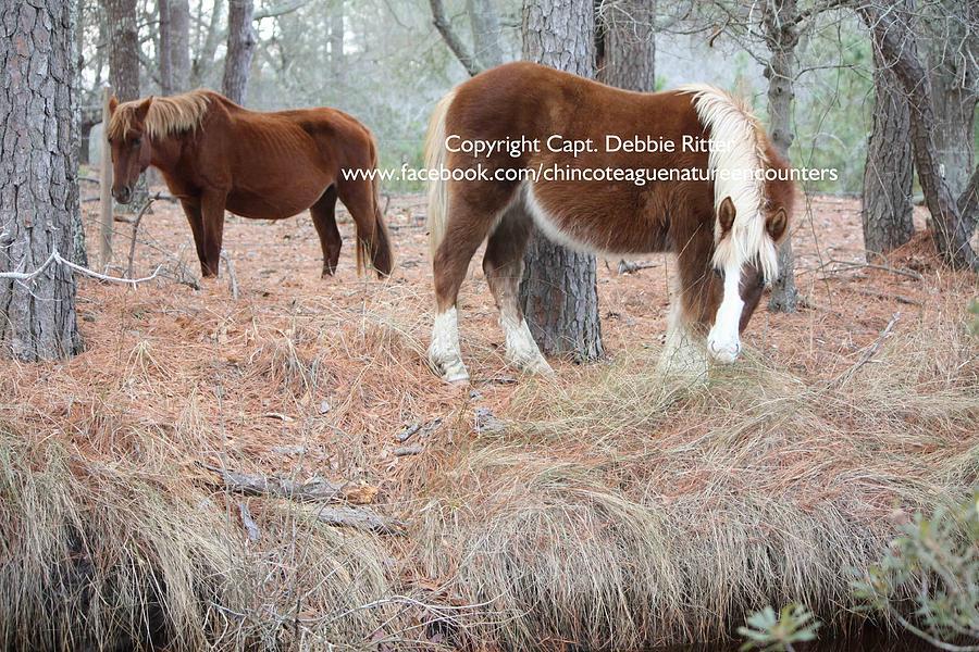 Wild Stallion Photograph - Riptide Teddy by Captain Debbie Ritter