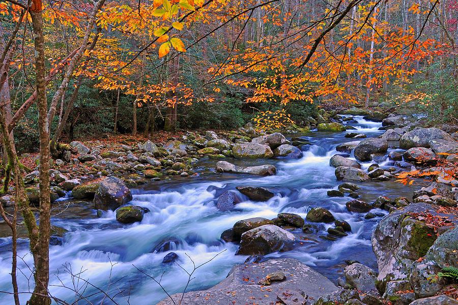 Stream Photograph - River Birch Overhangs Big Creek by Alan Lenk