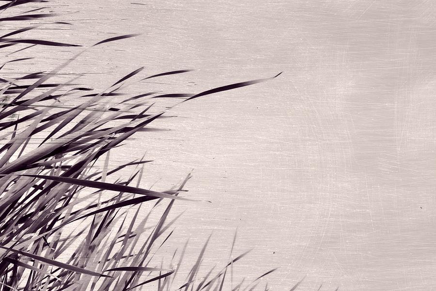 River Grass by Michelle Calkins