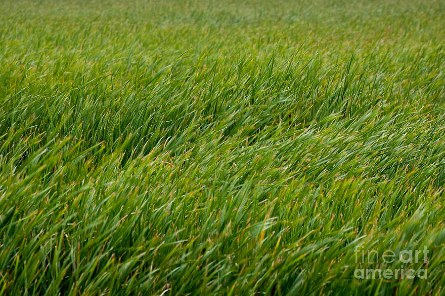 Blurry Photograph - River Of Grass by Susan Cole Kelly