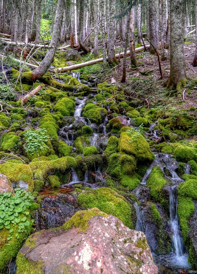 River of Moss by Peter Mooyman