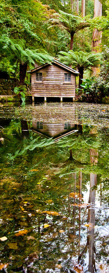 Dandenong Photograph - River Reflections by Az Jackson