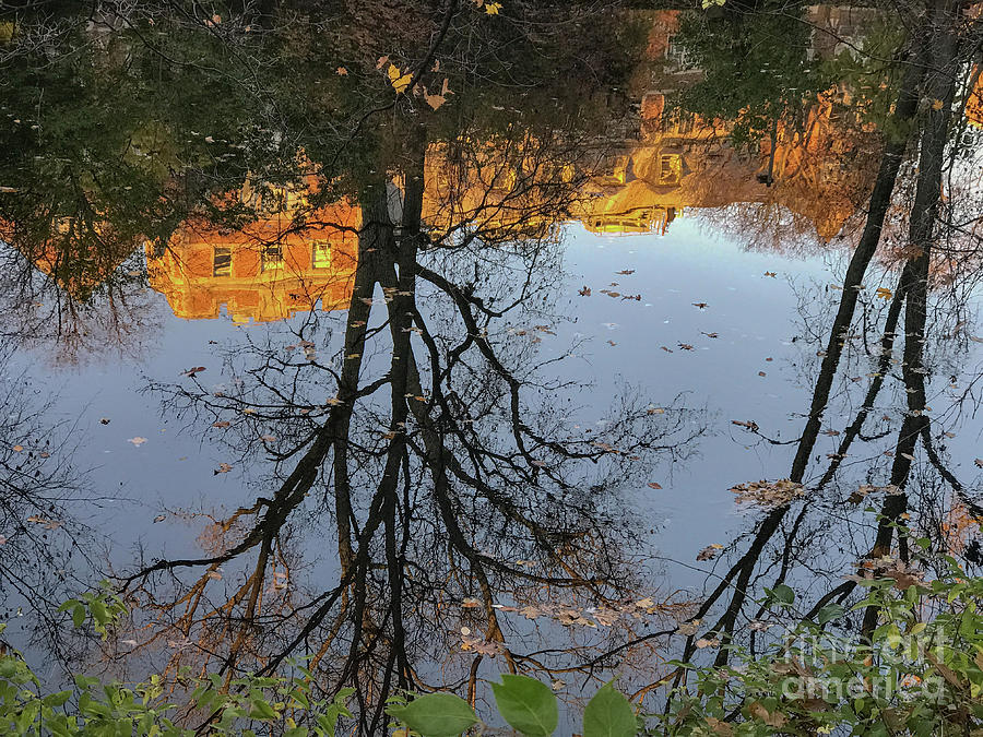 East Lansing Photograph - River Trees by Joseph Yarbrough