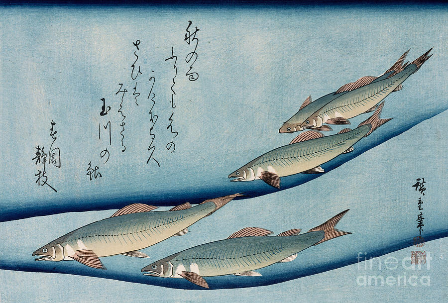 Trout Painting - River Trout by Hiroshige