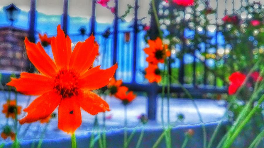 Colorful Photograph - Riverhouse Flowers by Dustin Soph