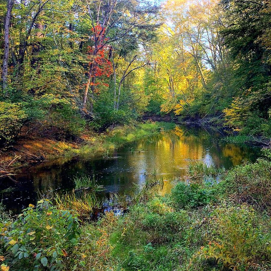 River Photograph - Riverscape In Autumn by Richard Hinds