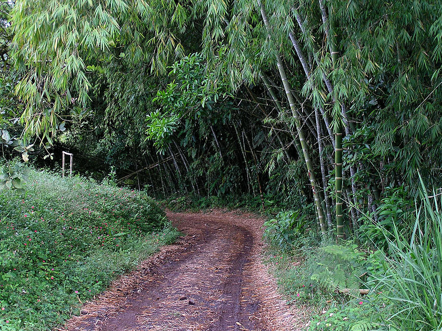 Colombia Photograph - Road Into Bamboo Forest by Jack Herrington