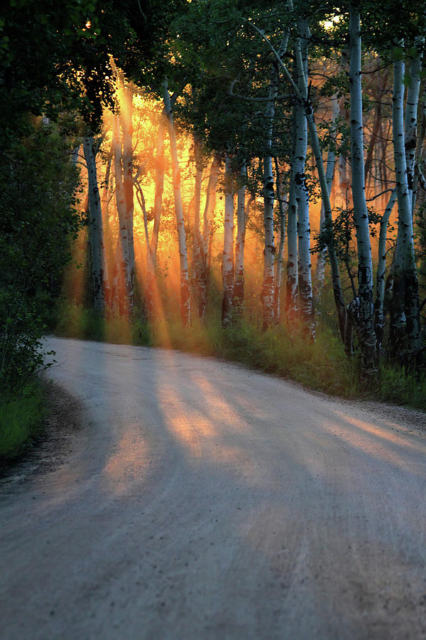 Road Rays by Shane Bechler