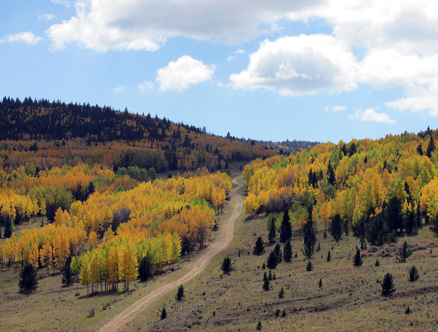 Road Through 50 Shades of Golden Aspens by Julia L Wright
